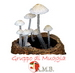 Leucoagaricus cinerascens - ultimo messaggio di marinetto