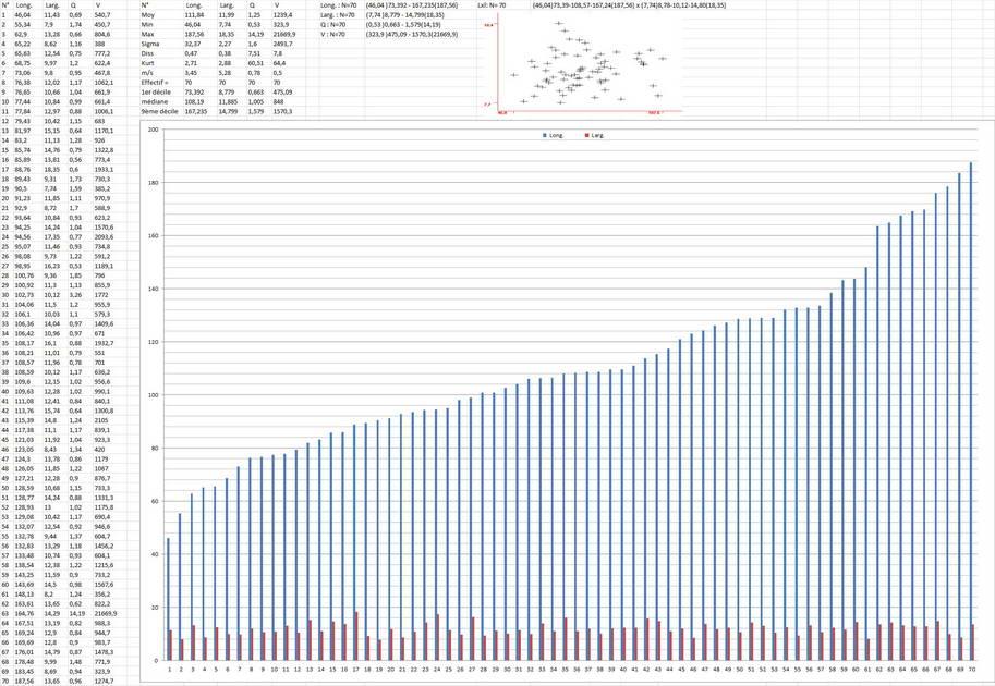 lepiota griseovirens 4598 12.jpg