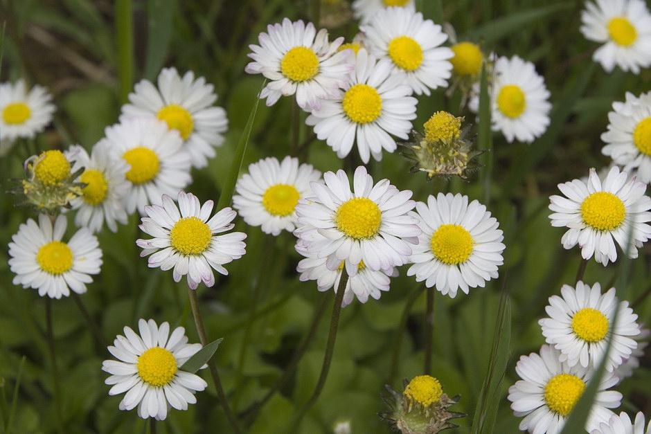Alcuni fiori primaverili un p di piante forum di - Fiori primaverili ...